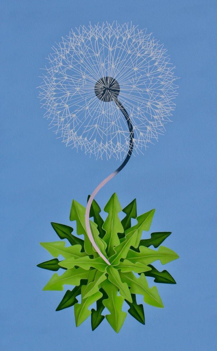 New World Dandelion