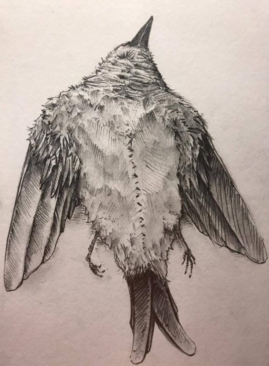 Drawing Done from Artists Memory of Bird Performance