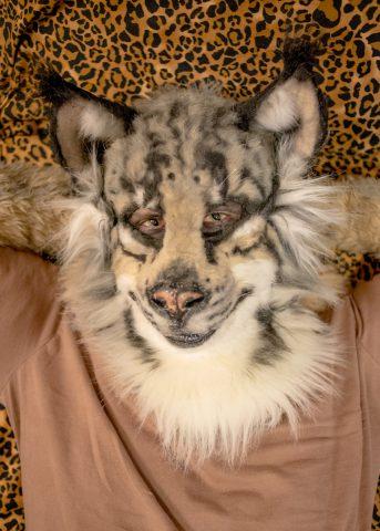 Kickstart Lynx